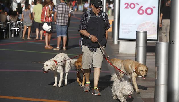 La presència de gossos al país ha augmentat.