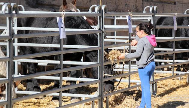 Un moment de la 39a Fira concurs de bestiar.