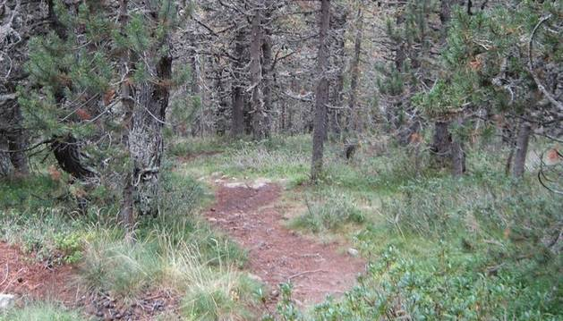 10. Passejar dins d'un bosc o davant del mar m'agrada moltíssim. Escolto, observo...