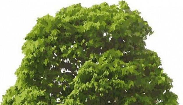 3. Els arbres són uns éssers que ens mantenen vius, són molt bonics. Ja n'he plantat uns quants.