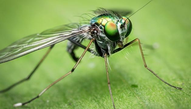 Les mosques poden veure en un radi de 360 graus.