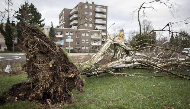 Un arbre caigut als carrers de Berlín.