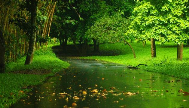 Amarar-me de la natura i el paisatge. M'aporta tranquil·litat i serenor