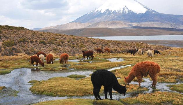 'Paisatges de Xile' s'exposarà al Centre de Congressos lauredià.
