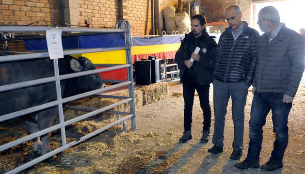 Toni Martí a la 7a Fira Concurs de mascles de la raça bruna d'Andorra