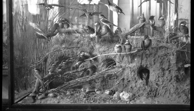 La mostra d'animals taxidèrmics es va exposar a Ordino de 1935 a 1948