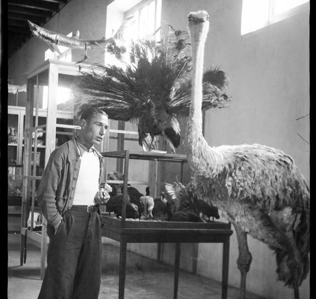 El museu comptava amb uns 1.700 éssers naturalitzats.