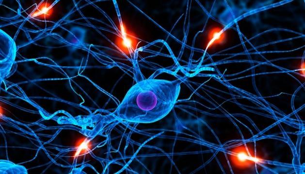L'esclerosi múltiple es produeix per l'atac del mateix sistema immune.