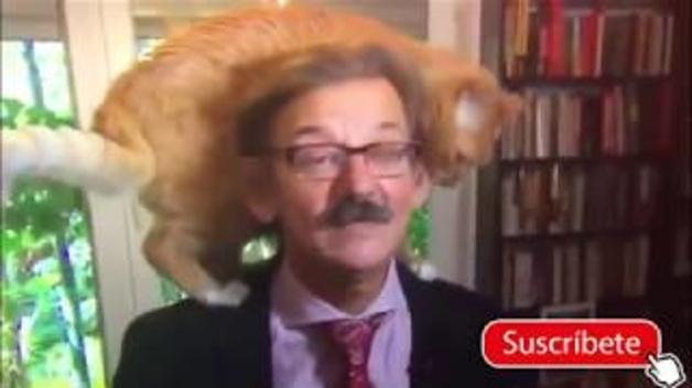 El gat que vol ser entrevistat