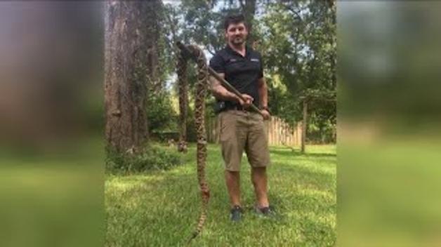 Un gos atrapa una serp