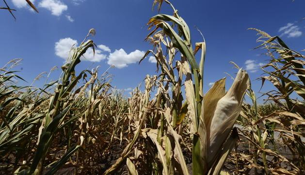 El brot s'ha associat al consum de blat de moro congelat.