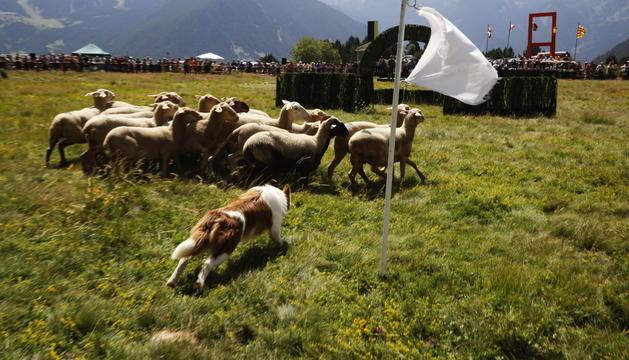 L'edició de l'any passat del concurs de gossos d'atura.