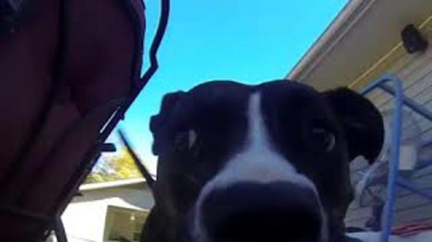 Visió canina