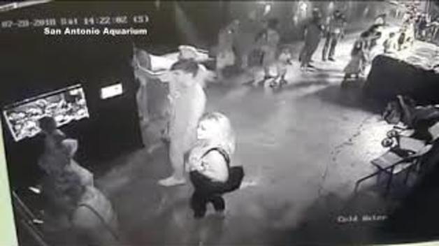 Estrany robatori a un aquari de Texas