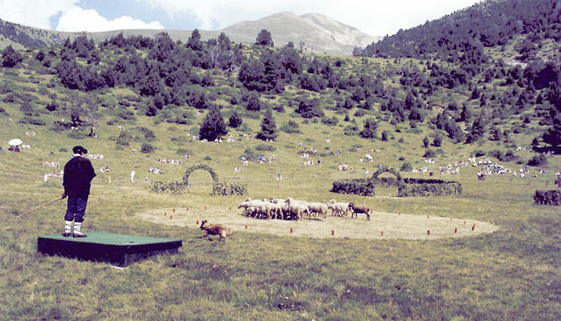 Un ramader durant l'exhibició de gossos