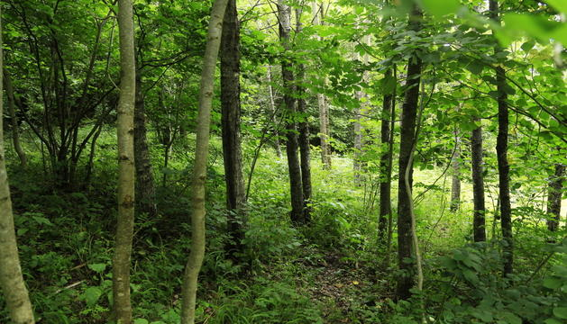 El perill d'incendi forestal al territori segueix sent baix.
