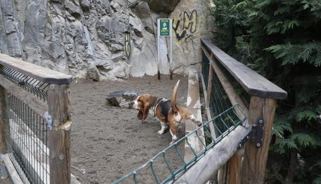 El pipicà és un lloc destinat perquè els gossos facin les seves necessitats, però on també s'han de recollir els excrements.