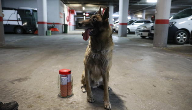 Un dels gossos de la policia.