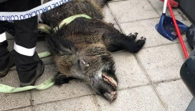 L'animal mort va ser rescatat del riu.