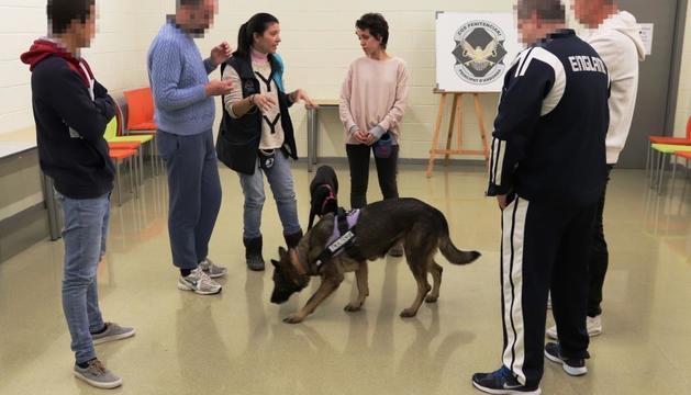 El Centre Penitenciari ofereix un curs d'auxiliar en educador caní