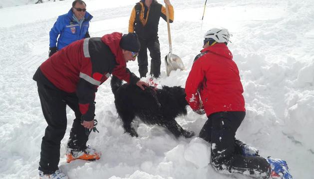 Els equips canins d'estudi de la neu a Ordino Arcalís.