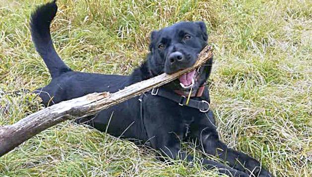 Un dels gossos d'Adopcions Bomosa.