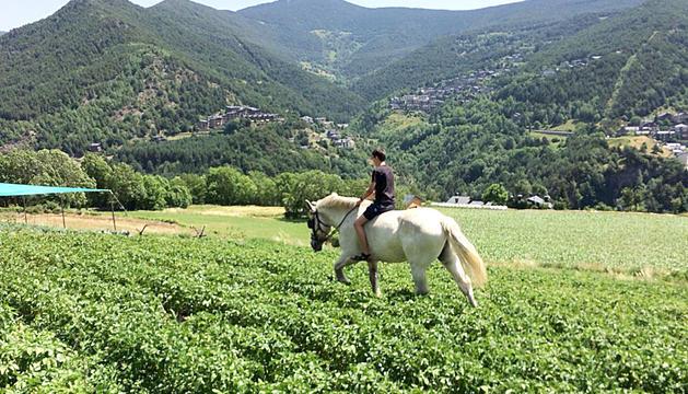 El cavall del Centre Terapèutic Residencial Adrimar de Sispony que utilitzen com a tractament en la rehabilitació