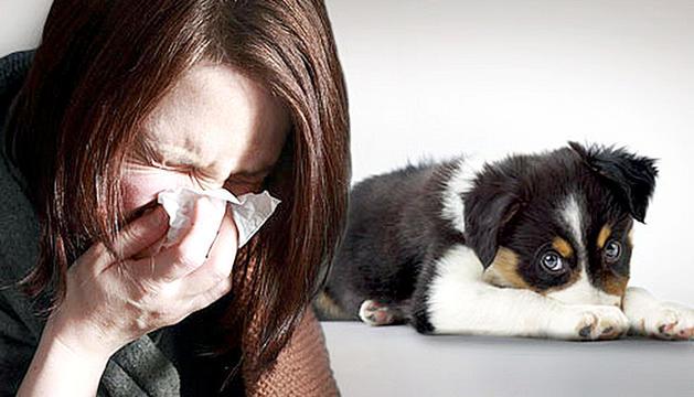 El 15% de la gent té al·lèrgia a les mascotes