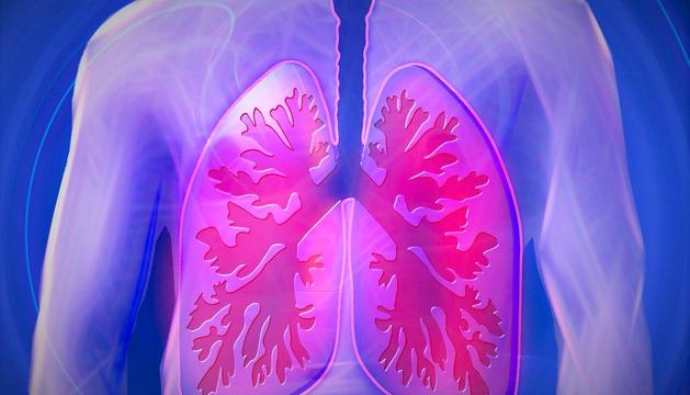 El meridià dels pulmons