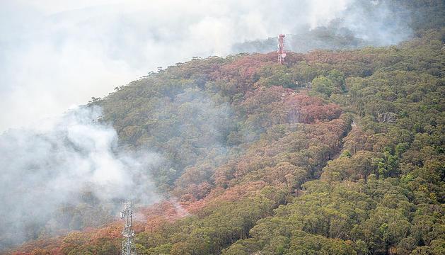 Els incendis forestals arrasen Austràlia.