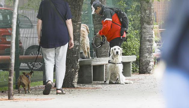 Propietaris passejant el gos.