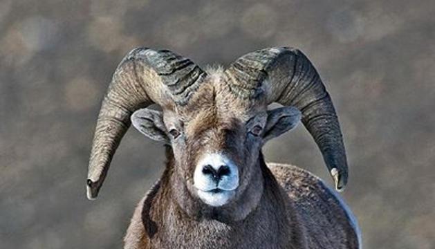 Un mufló.