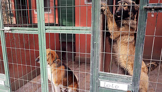 Dos gossos a les gàbies de les instal·lacions de Sant Julià.