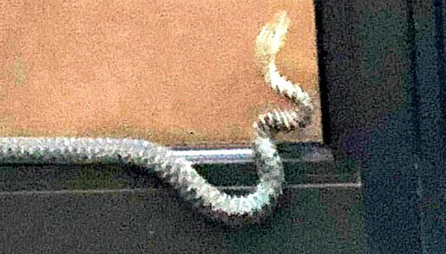 La serp capturada ahir al matí a Ciutat de Sabadell.