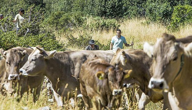200 animals i poca gent a la benedicció del bestiar d'Ordino