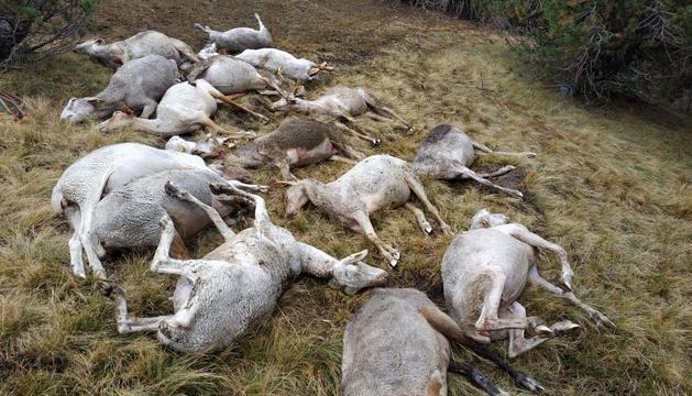 El ramat mort a la Vall d'Incles