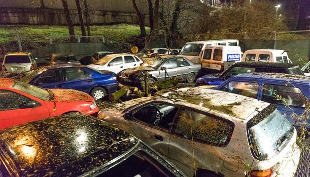 Alguns dels cotxes afectats per l'arbre.