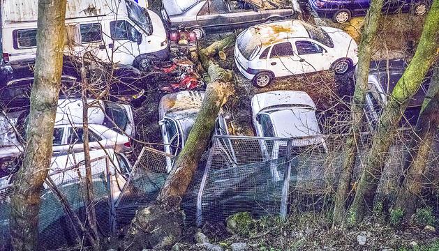 La caiguda d'un arbre causa danys a diversos cotxes