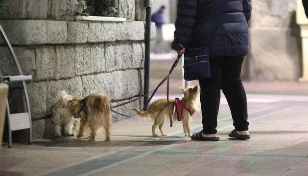 Dos gossos al carrer.