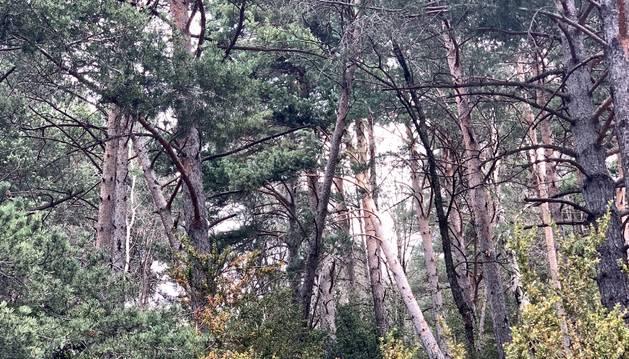 Una de les zones afectades per la tala.