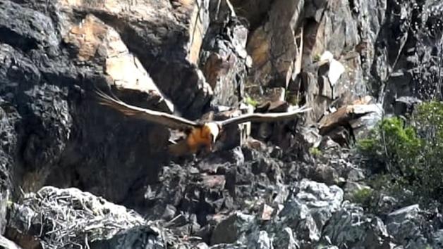 Bestioletes, la fauna autòctona en el seu hàbitat natural