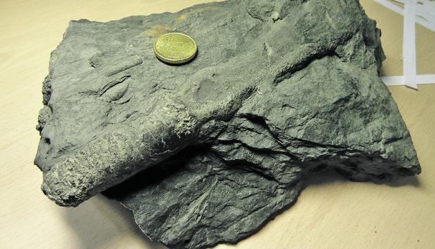 El patrimoni paleontològic d'Andorra
