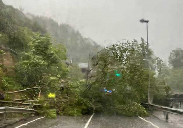 L'arbre caigut entre la Massana i Ordino