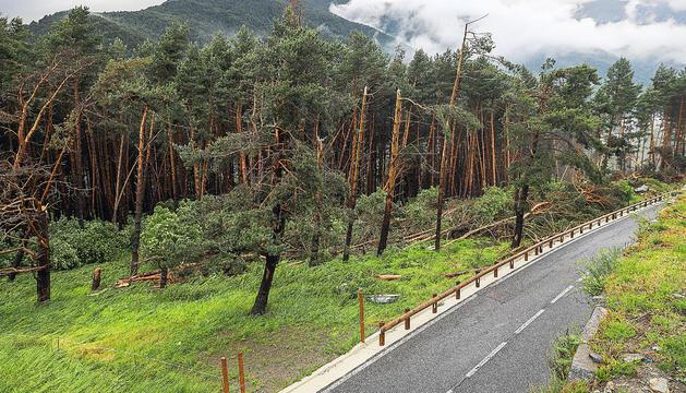 El vent generat per la forta tempesta d'aquesta tarda ha malmès nombroses infraestructures i vegetació