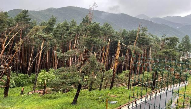 La tempesta arrasa la zona boscosa propera a l'Aldosa