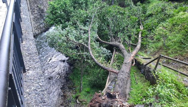 Un arbre talla el camí Ral