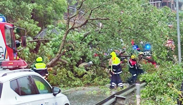 L'arbre que va impedir el pas entre la Massana i Ordino.