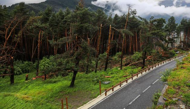 Les afectacions a la zona boscosa propera a l'Aldosa.