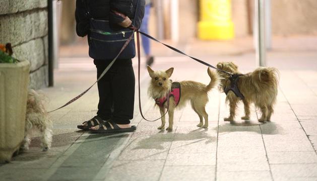 Una propietària passejant els gossos.
