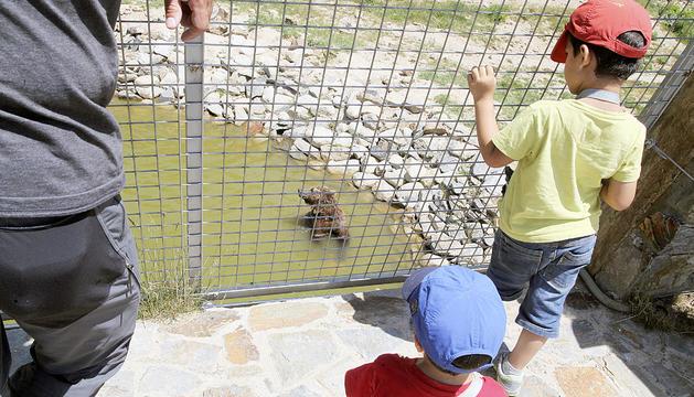 Nens observant un os del parc.